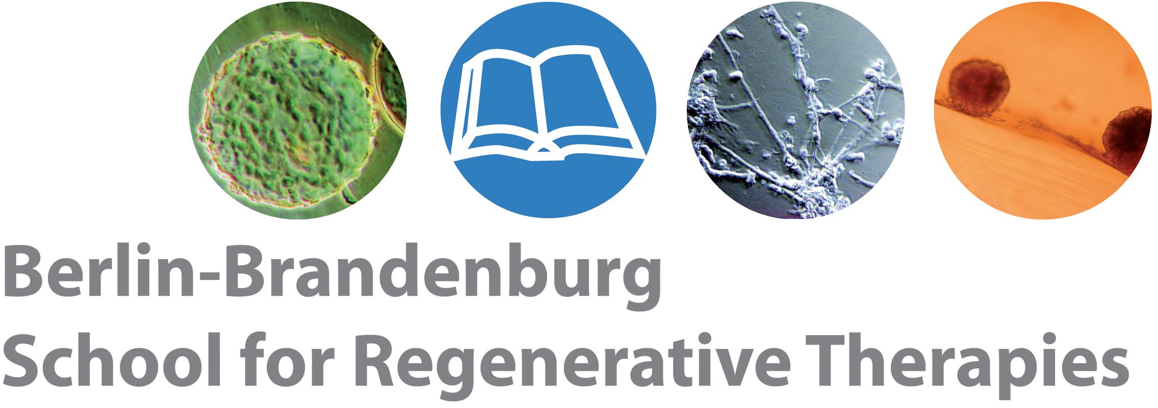 Logo of the Berlin-Brandenburg School for Regenerative Therapies